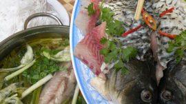 Cá trắm giòn được nuôi như thế nào?
