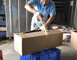 Quy cách giao hàng cá trắm giòn
